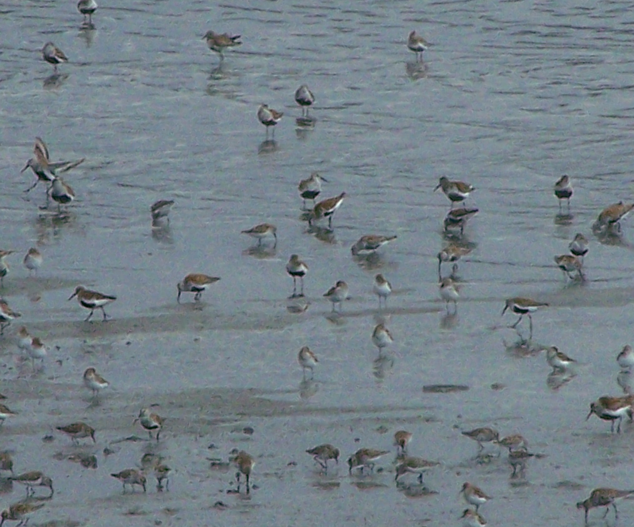 Shorebirds, Homer Trip