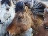 horses trio